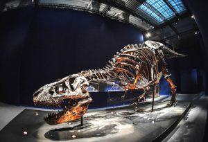 dinosaurio | Foto: AFP
