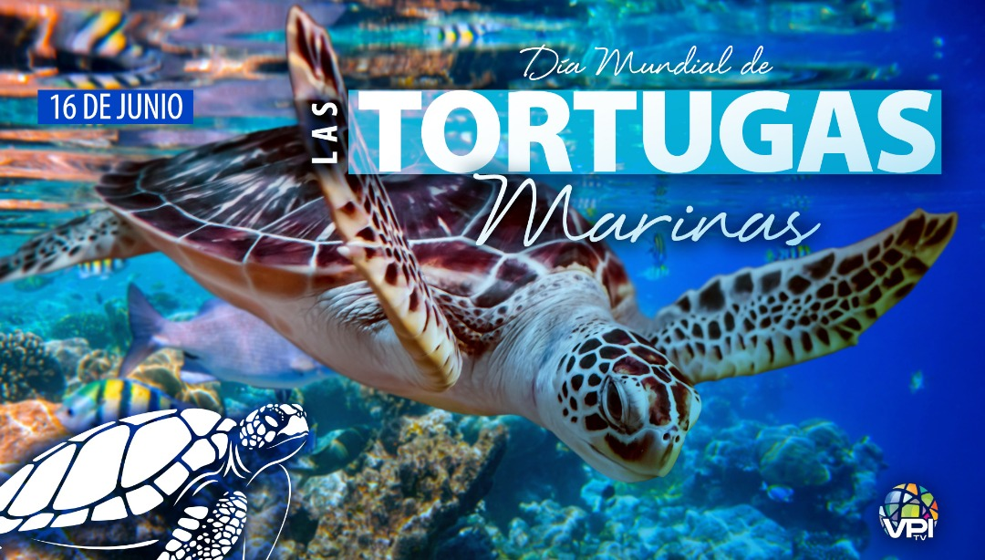 Día Mundial de las Tortugas Marinas