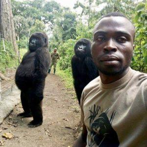Los gorilas Ndakasi y Ndeze, junto al cuidador Mathieu Shamavu.