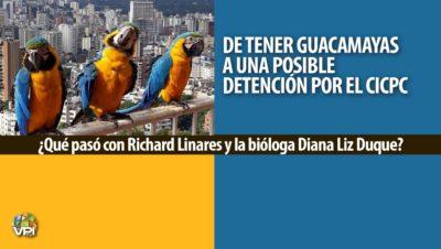 De tener guacamayas a una posible detención por el Cicpc ¿Qué pasó con Richard Linares y la bióloga Diana Liz Duque?