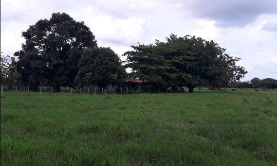 Indígenas en Apure habrían asesinado y descuartizado a dueño de finca