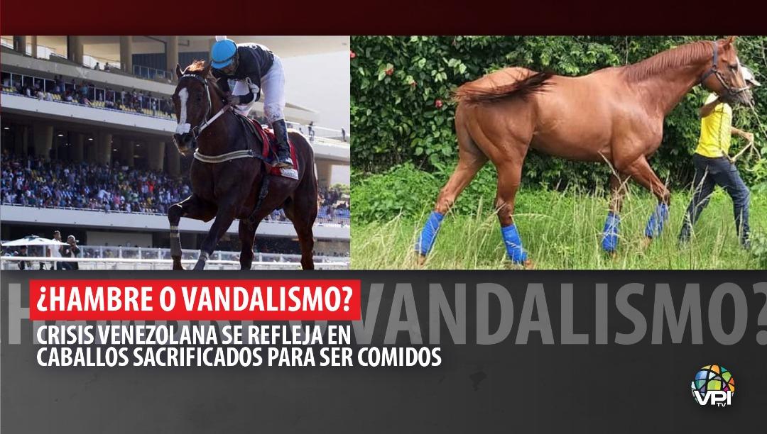 ¿Hambre o vandalismo Crisis venezolana se refleja en caballos sacrificados para ser comidos | Foto: VPItv