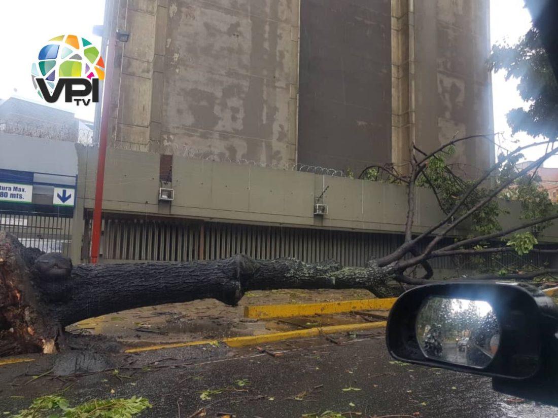Fuertes precipitaciones en Caracas ocasionaron caída de árboles