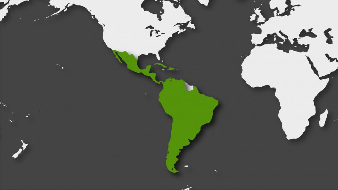 América Latina y el Caribe superaron los 4 millones de casos