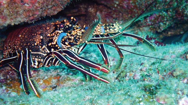 especies Galápagos