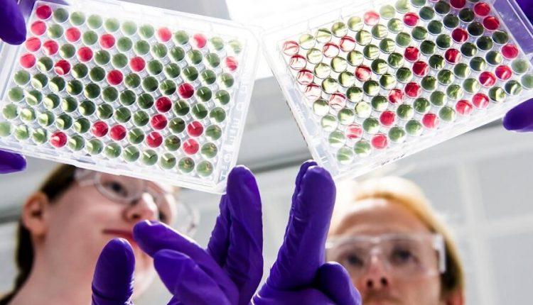 AstraZeneca retomó pruebas de la vacuna contra el nuevo coronavirus