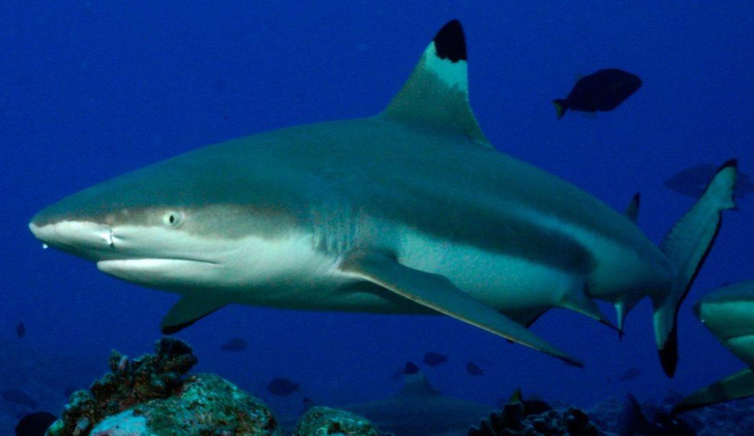Tiburón ataca a bañistas en Miami Beach