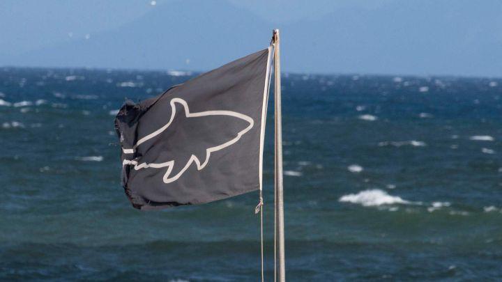 En Australia: Hombre murió tras ser atacado por un tiburón