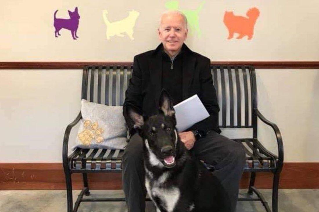 Biden, mascotas a la Casa Blanca