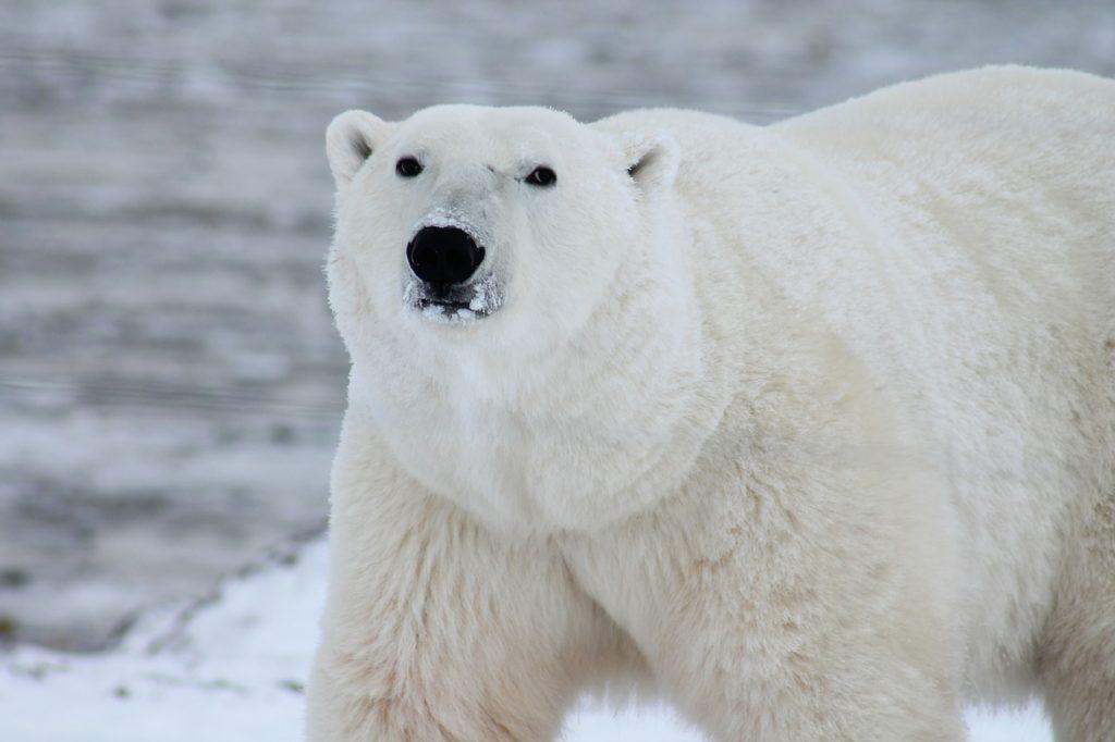 radar-ososo